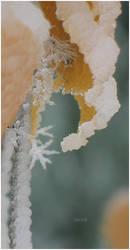 snow dancer by I-X-O-R-A