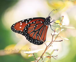 On The Wings of a Butterfly by CandiceSmithPhoto