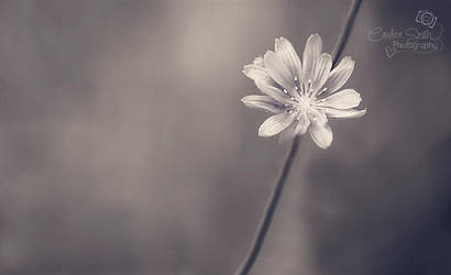 Simplicity by CandiceSmithPhoto