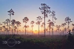 Highlands Hammock Sunrise by CandiceSmithPhoto