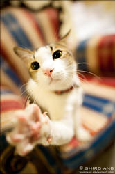 Cats - 43 by shiroang