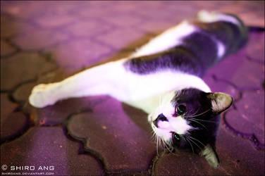 Cats - 44 by shiroang