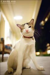 Cats - 70 by shiroang