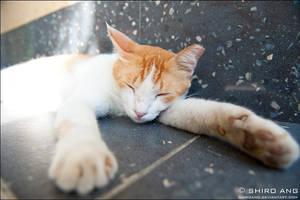 Cats - 72 by shiroang