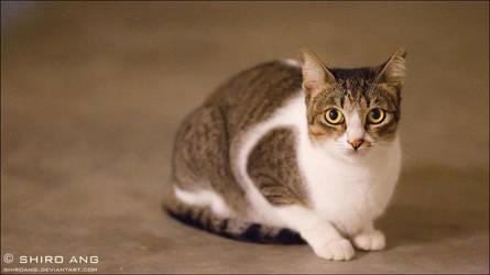 Cats - 84 by shiroang