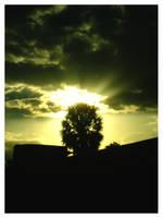 Sunny Tropics by calva88