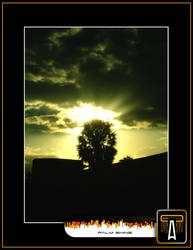 Palm Shine by calva88