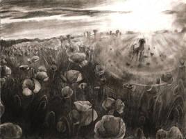 Poppy field by Hymnodi
