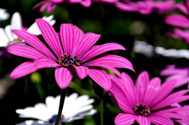 Mom's Flowers by proze