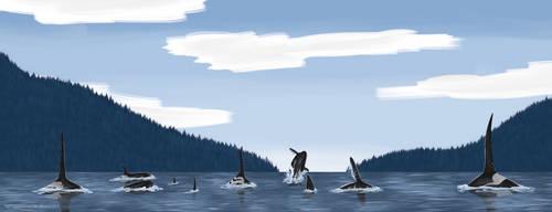Killer Whales - Concept Art by lightshootingstar
