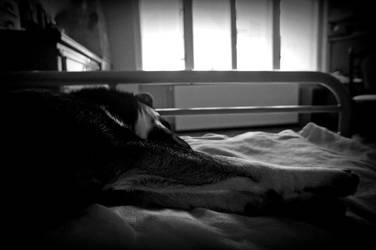 wake up by CynamoonRessa