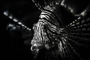 Underwater lion by Threepwoody