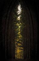 Waldfenster by Threepwoody