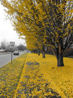 the yellow path by Houlton