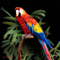 Parrot - Digital Painting by kfairbanks