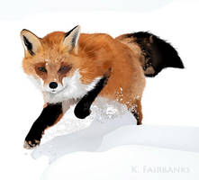 Winter Fox by kfairbanks