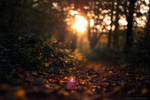 ~ Fall ~ by MaelstromPhotography