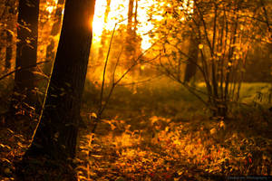 ~ Sunset in the Woods ~ by MaelstromPhotography