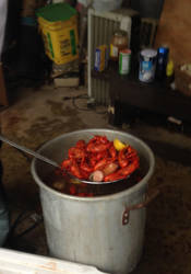Crawfish by ant3ater