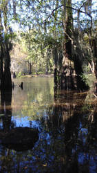 Swampin' by ant3ater