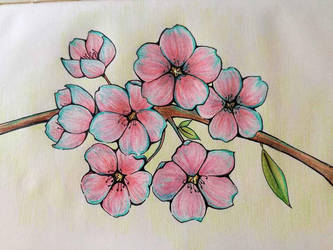 Cherry blossoms by Chelidonia