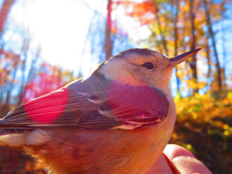 Illuminated Feathers by CalendarCat