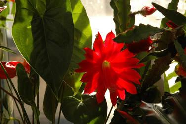 Flower Power by celebdu