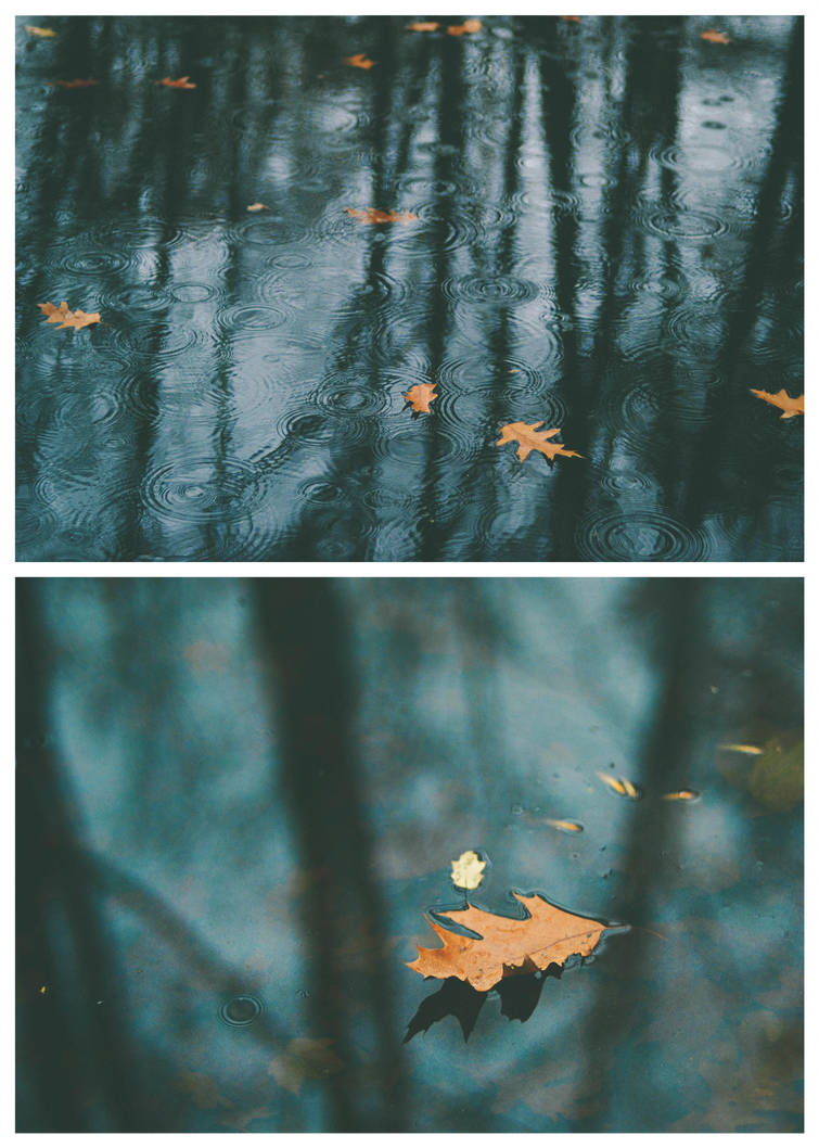 Silent Autumn by MeishkaBokeh