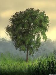 Tree by MjP-70