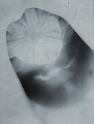 Photogram: shaded by HoremWeb