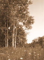 Meadow's Edge by ThatArtistFeller