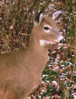 O Deer by ThatArtistFeller