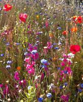 Wildflowers by DigitalLithium