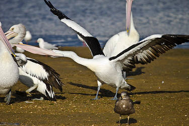 Pelican 6 by mfunnell