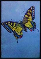 swallowtail by czmartin