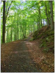 fairytale beech forest by czmartin