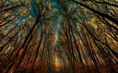 Winter Sun by Photoarus