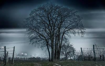 Mystiy of a tree by Photoarus