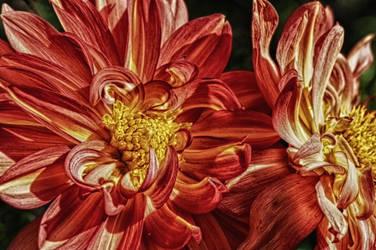 Flower by Photoarus