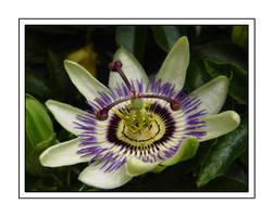 Flower by kriterija