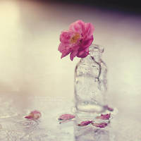 fragility by Cochalita