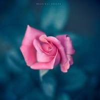 Surrounding my heart by Cochalita