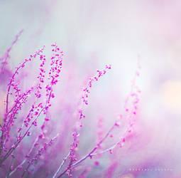 Bright side by Cochalita