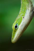 Lizard by Talkingdrum
