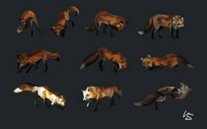 10 Foxes by berov