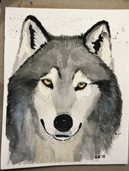 Wolf watercolor by IckyDog