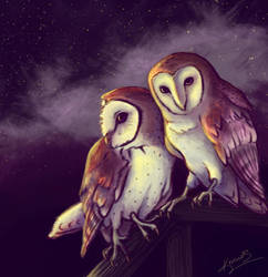 Trade - Barn Owls by keinneb