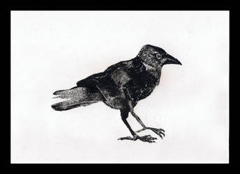 Jackdaw - 2'nd print - 1'st ghost by kakazpl
