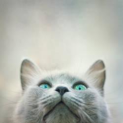 Meowwww... by MartaC