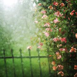 Rainy day... by MartaC
